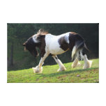 Gypsy Vanner Stretched Canvas Prints