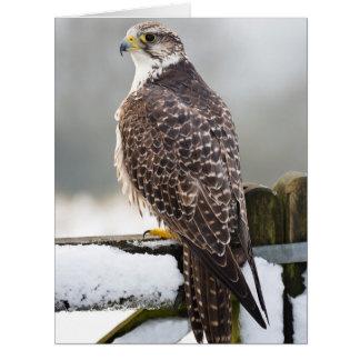 Gyr falcon card