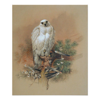Gyrfalcon - 1861 poster