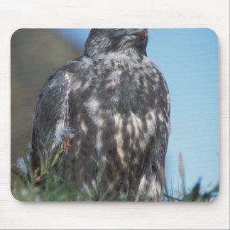 gyrfalcon, Falco rusticolus, juvenile getting 2 Mouse Pad