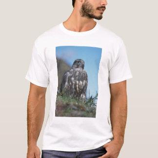 gyrfalcon, Falco rusticolus, juvenile getting 2 T-Shirt