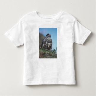 gyrfalcon, Falco rusticolus, juvenile getting 2 Toddler T-shirt