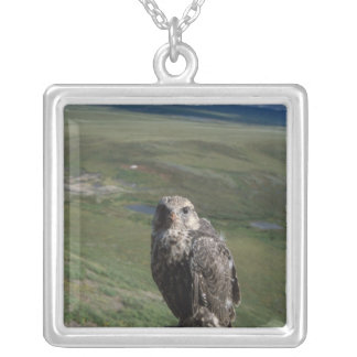 gyrfalcon, Falco rusticolus, juvenile getting Silver Plated Necklace