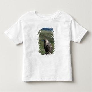 gyrfalcon, Falco rusticolus, juvenile getting Toddler T-shirt