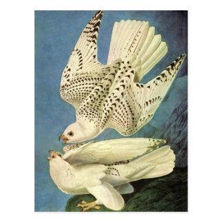 Gyrfalcon John James Audubon Tarjeta Postal