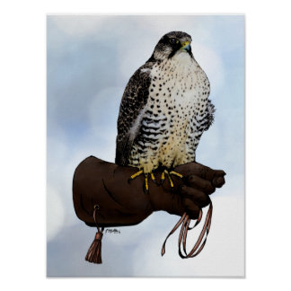 Gyrfalcon on Glove Poster