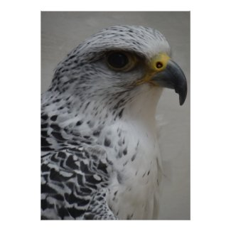 Gyrfalcon Poster