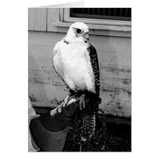 Gyrfalcon resting on handler's gauntlet notecard greeting card