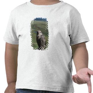 gyrfalcon rusticolus de Falco el conseguir juven Camisetas