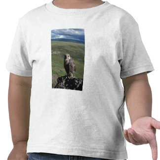 gyrfalcon rusticolus de Falco el conseguir juven Camiseta