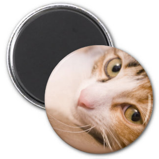 Gyro the cat 2 inch round magnet