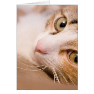 Gyro the cat card