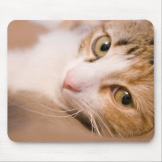 Gyro the cat mouse pad