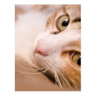Gyro the cat postcard