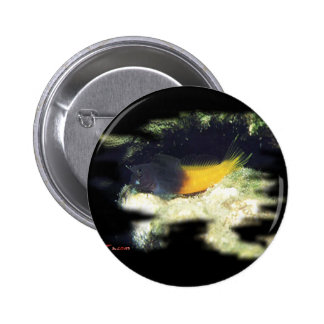 H2Oasis BiColor Blenny 2 Inch Round Button
