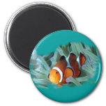 H2Oasis Clownfish Fridge Magnet