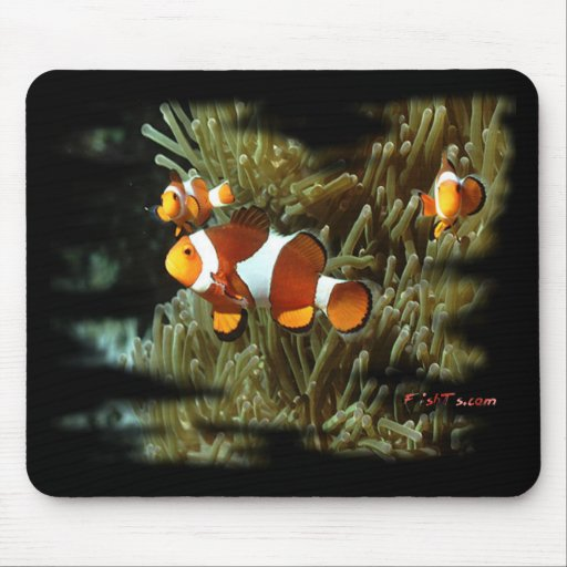 H2Oasis Clownfish Mouse Pad