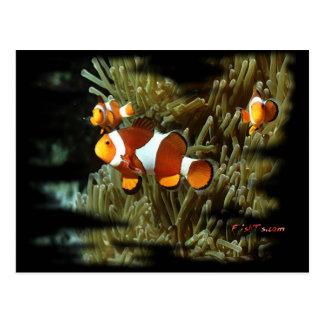 H2Oasis Clownfish Postcard