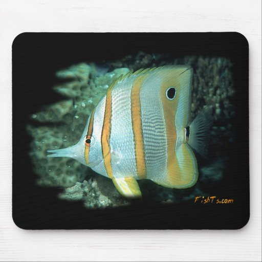 H2Oasis Copperband Butterfly Mouse Pads