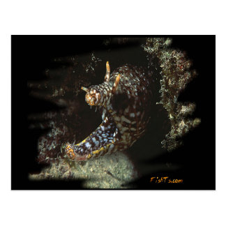 H2Oasis Dragon Moray Postcard