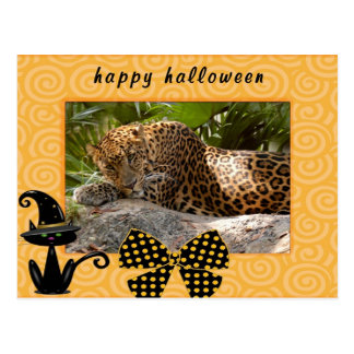h-116-leopard-cheetaro postcards