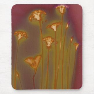 H.A.S. Mousepad de los artes, imagen: Lago,