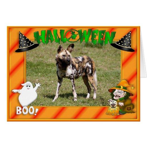h-african-wild-dog-015 card