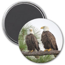 H&O Circle Magnet (Various Sizes Available)