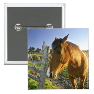 Haast, New Zealand. A horse ranch in New 2 2 Inch Square Button