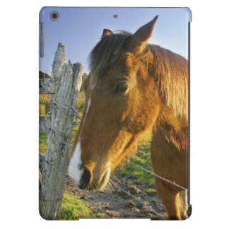 Haast, New Zealand. A horse ranch in New 2 iPad Air Cases