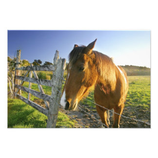 Haast, New Zealand. A horse ranch in New 2 Art Photo