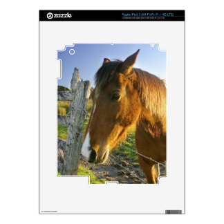 Haast, New Zealand. A horse ranch in New 2 Decals For iPad 3