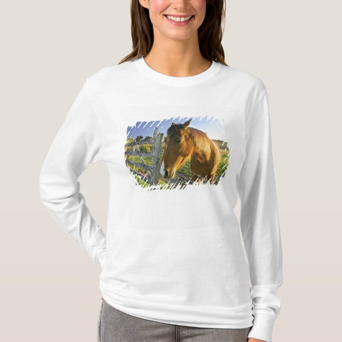 Haast, New Zealand. A horse ranch in New 2 T-Shirt