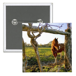 Haast, New Zealand. A horse ranch in New 2 Inch Square Button