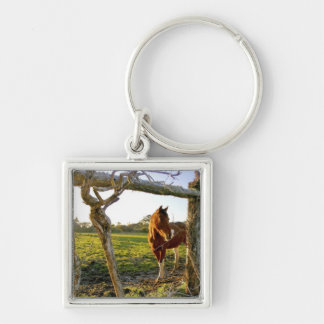 Haast, New Zealand. A horse ranch in New Keychain