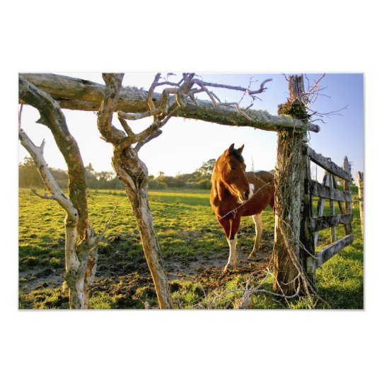 Haast, New Zealand. A horse ranch in New Photo Print