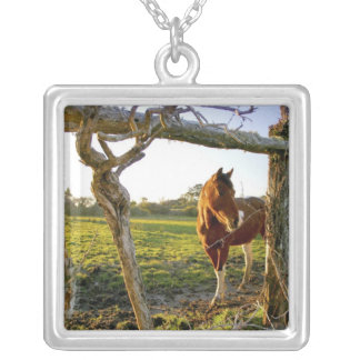 Haast, New Zealand. A horse ranch in New Silver Plated Necklace