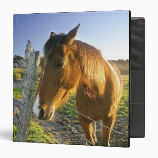 Haast, Nueva Zelanda. Un rancho del caballo en nue