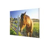 Haast, Nueva Zelanda. Un rancho del caballo en nue Impresiones De Lienzo