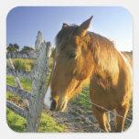Haast, Nueva Zelanda. Un rancho del caballo en Calcomania Cuadradas