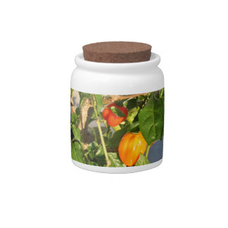 Habanero Peppers on Plant Photo twisted Candy Jar