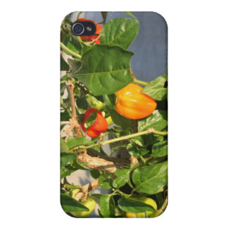 Habanero Peppers on Plant Photo twisted iPhone 4/4S Cases