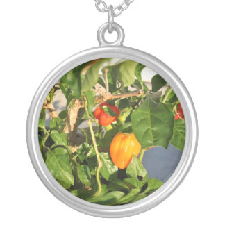 Habanero Peppers on Plant Photo twisted Silver Plated Necklace