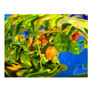 Habanero Peppers on Plant Trippy photo Postcard