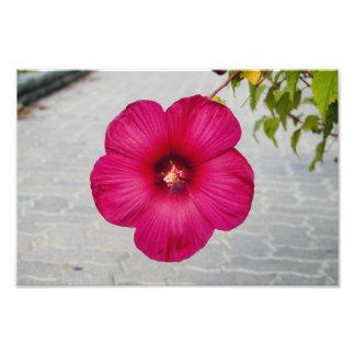 Habbicus Pink Flower Photo Print