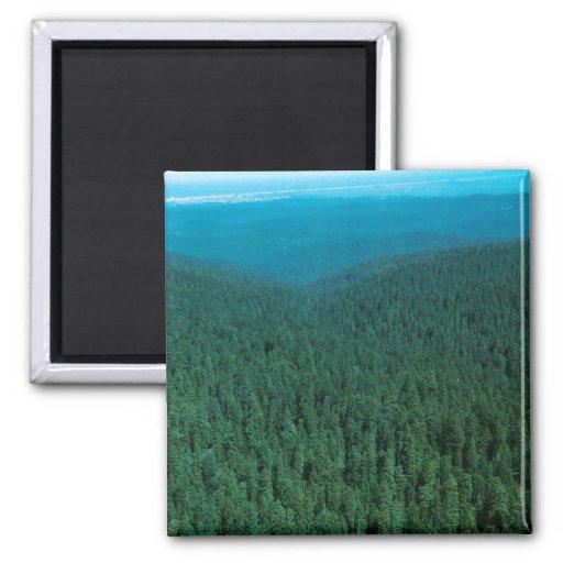 Hábitat del bosque, California Imán Cuadrado