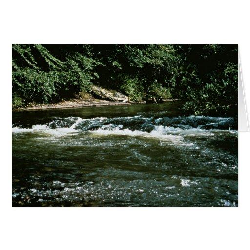 Hábitat del río tarjetas