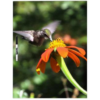 Hábitat floral de la flor del girasol del pájaro pizarras blancas
