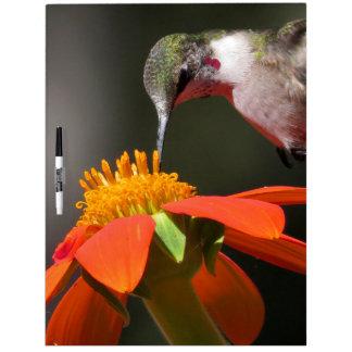Hábitat floral de la flor del girasol del pájaro tableros blancos