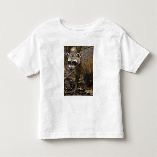 Habituated Crab-eating Raccoon Procyon Toddler T-shirt